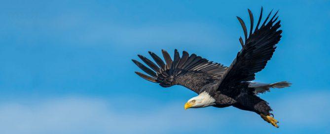 El mite de l'àguila